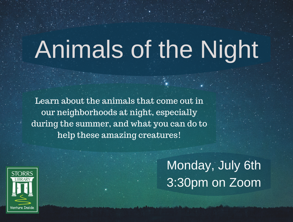 Flyer for Animals of the Night
