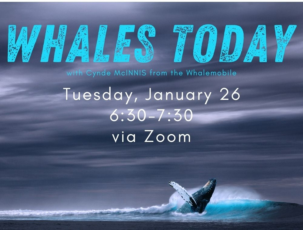 Flyer for Whales Today